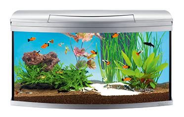 перевозка аквариума киев